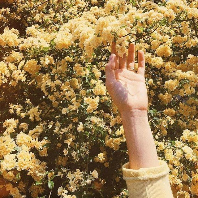 Flowers, flowers everywhere 🌼 ——————————————————————————— #design #art #love #style #instagood #beautiful #photooftheday #illustration #artist #webdesign #graphicdesign #pinterest #designer #flowers #photo #artwork #girl #inspiration #smallbiz #mumboss #momboss #girlboss #freelance #love #hustle #freelancelife #workfromhome #business #female #thefutureisfemale | Image via Pinterest