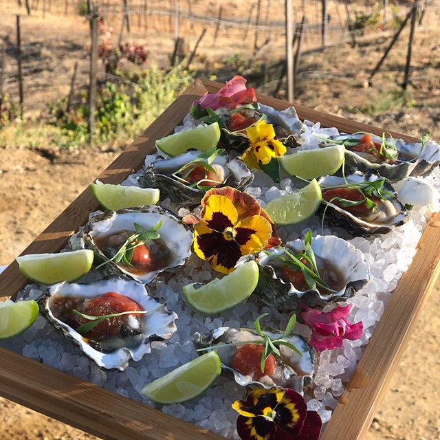 Kumamoto oysters with ponzu mignonette granita, cocktail sauce, key lime and cilantro . . . . #oysters #kumamoto #seafood #events #weddings #saddlerockranch #saddlerockwedding #food #foodies #saturday #yummy #eeeeeats #catering #oystershucker