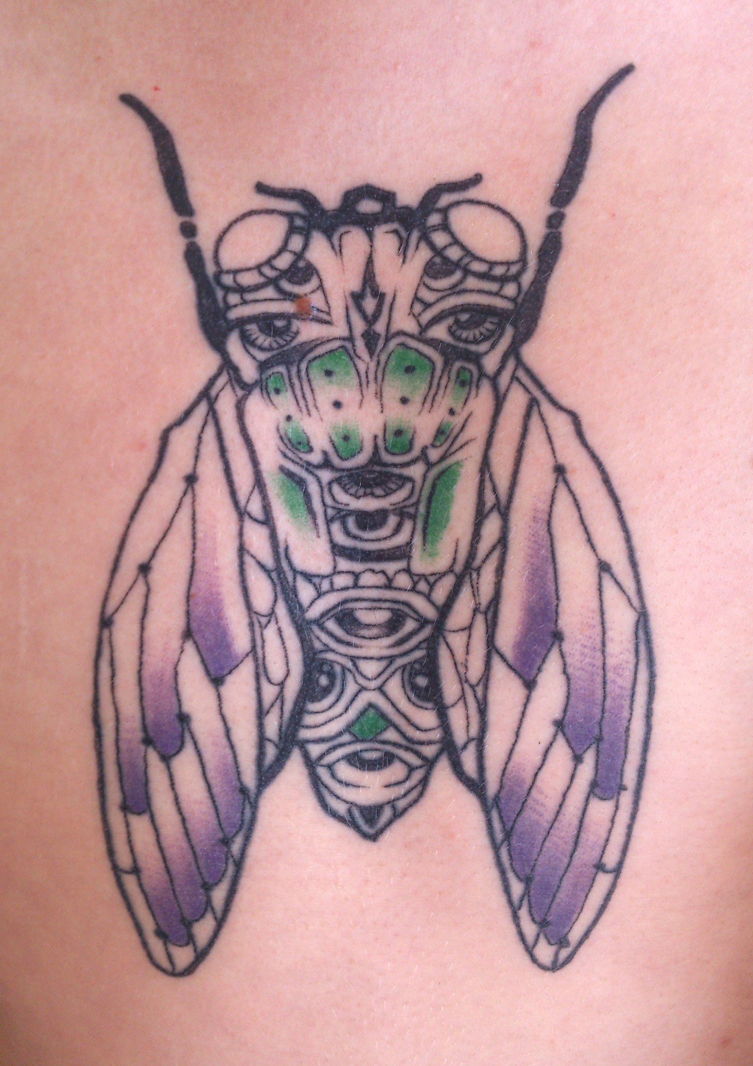cicada-tattoo-ink-insect-chest-sam-shennan-ud3-sydney-tattoo-designer-in-skin-pretty-colourful-line.jpg