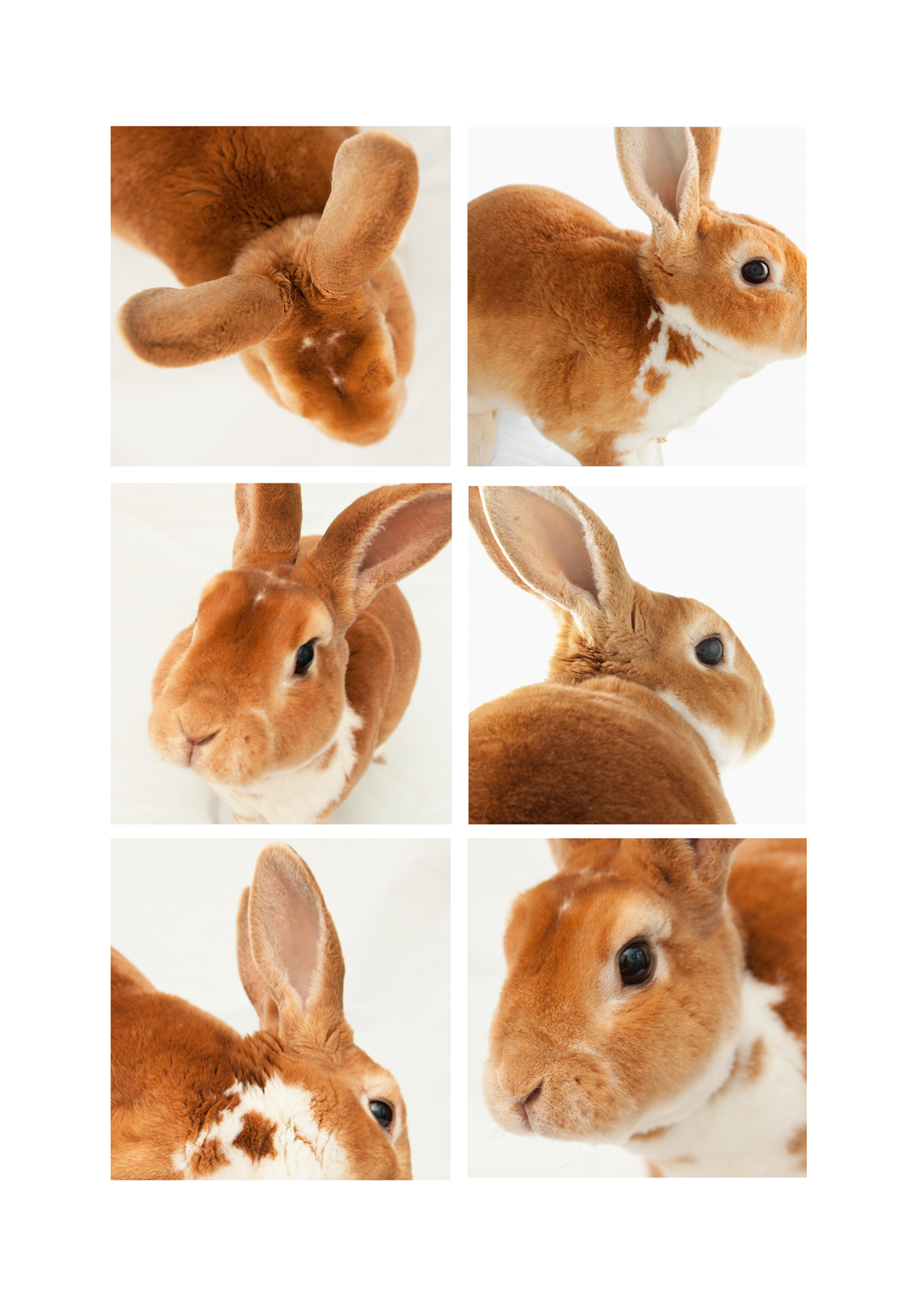 London_Portrait_Photographer_Studio_Photography_Pet_Photography_Rabbit-021_woody.jpg