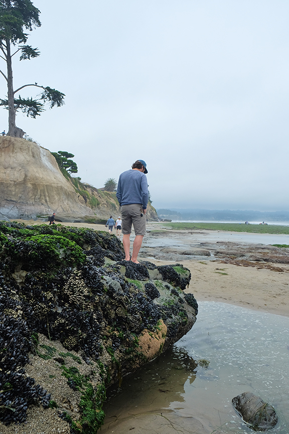 Checking out the low tide