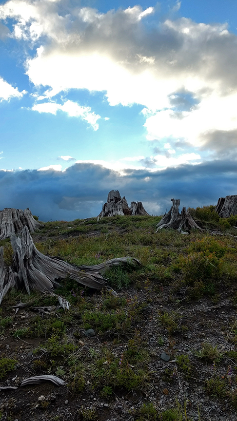 dead stumps at Ridge Trail campgrounds