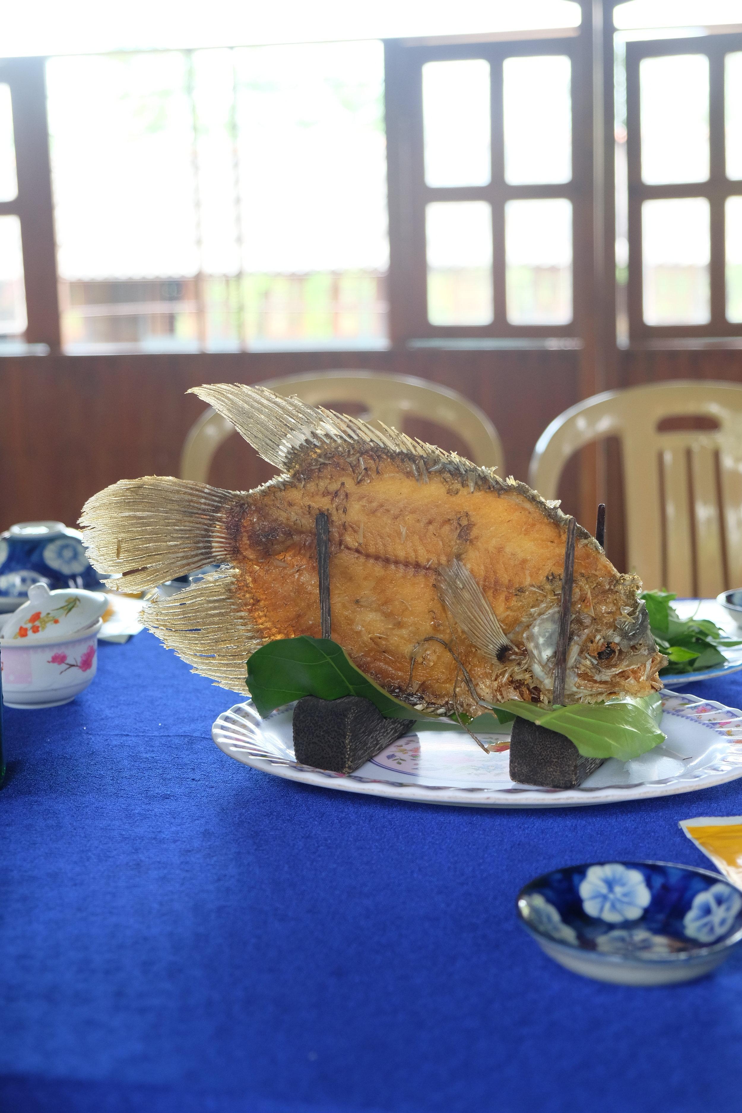 Mekong River Fish