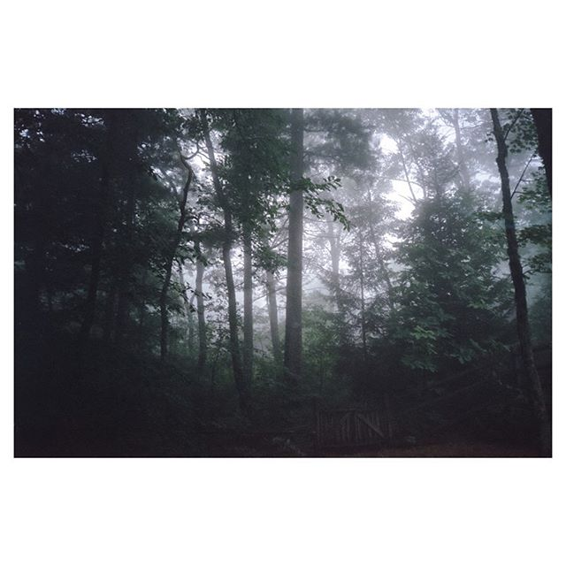 A thick fog rolled in during one of the days while we were in Highlands, NC, really cool to see it happen so quickly. Thankfully I had my point and shoot film camera on me to capture this photo.