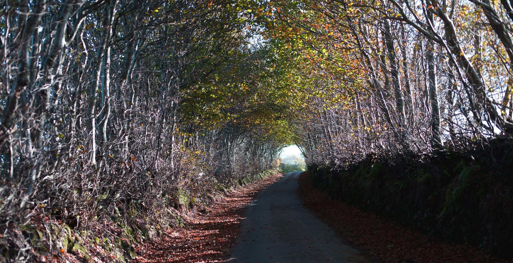 Lane above The Rockford