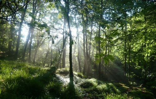 Woods at Rockford
