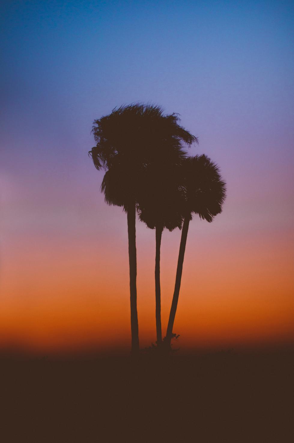 FloridaPalmTrees.jpg