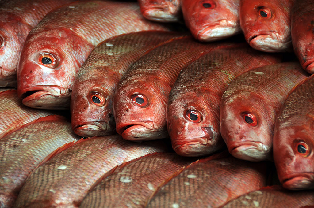 Fish-Market_Adam-Jacobs-Photography_Food-Photo-15.jpg