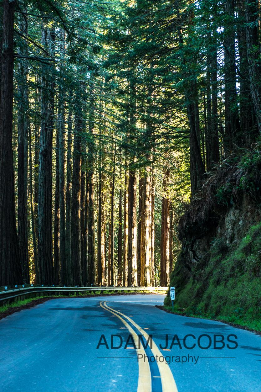 Adam Jacobs_Landscape Travel Photography_San Francisco_5
