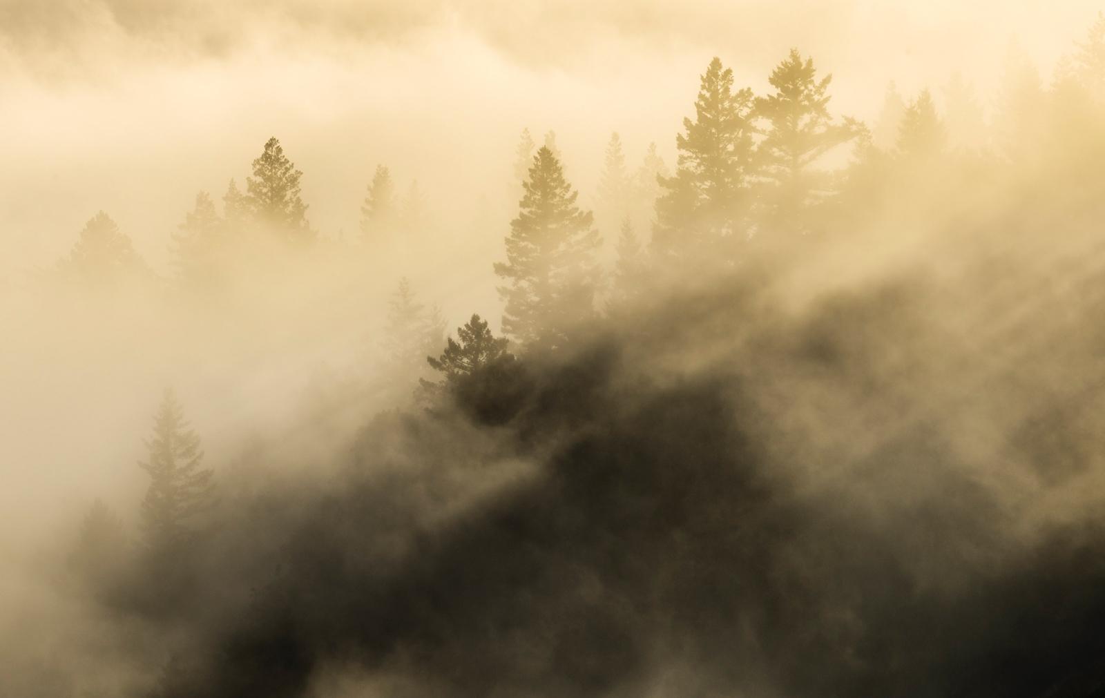 Adam Jacobs Photography Bay Area Photographs-24.jpg