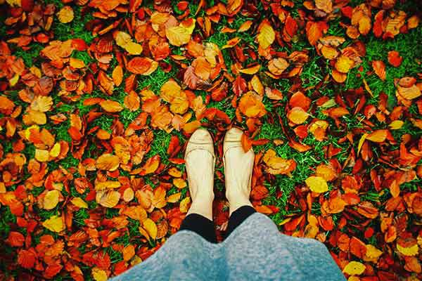 Golden Leaves in Autumn | Cloudberry Lane