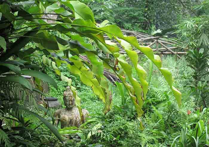 Magic and Yoga in Beautiful Bali