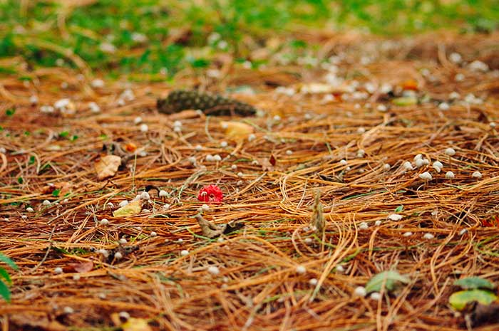 Mushrooms hiding in pine needles | Cloudberry Lane