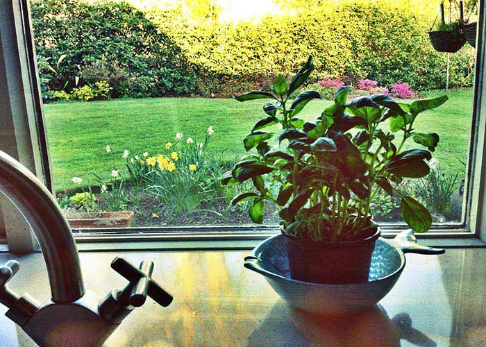 Planning a vegetable garden | Cloudberry Lane