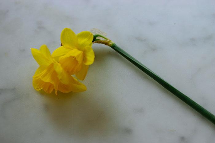weekend-link-love-daffodil-golden.jpg