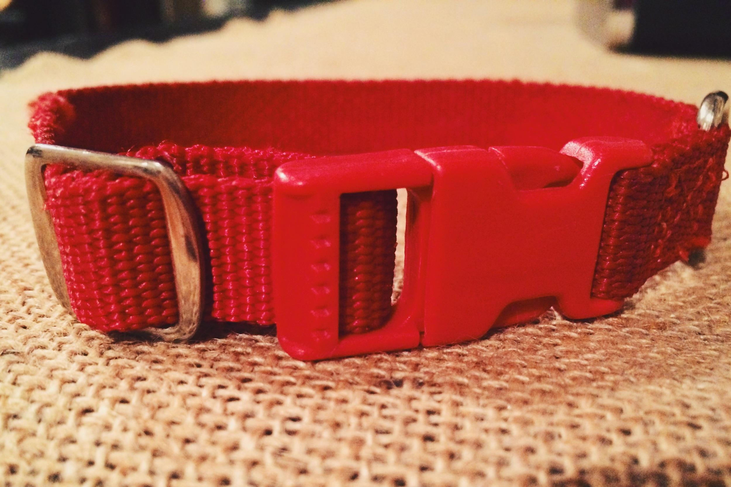 First puppy red collar ❤️