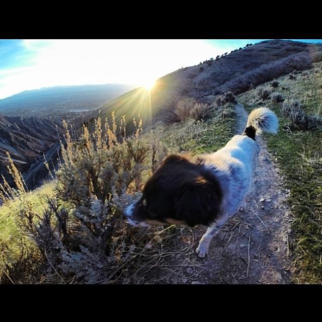 Millcreek Canyon, Utah | Happy Place of @forgottenpeak | #adventure #bucketlist #climb #clouds #discover #explore #neverstopexploring #greatoutdoors #gooutside #utah #nature #naturegram #naturelover #natureaddict #travel #travelgram #traveladdict #wander #wanderlust