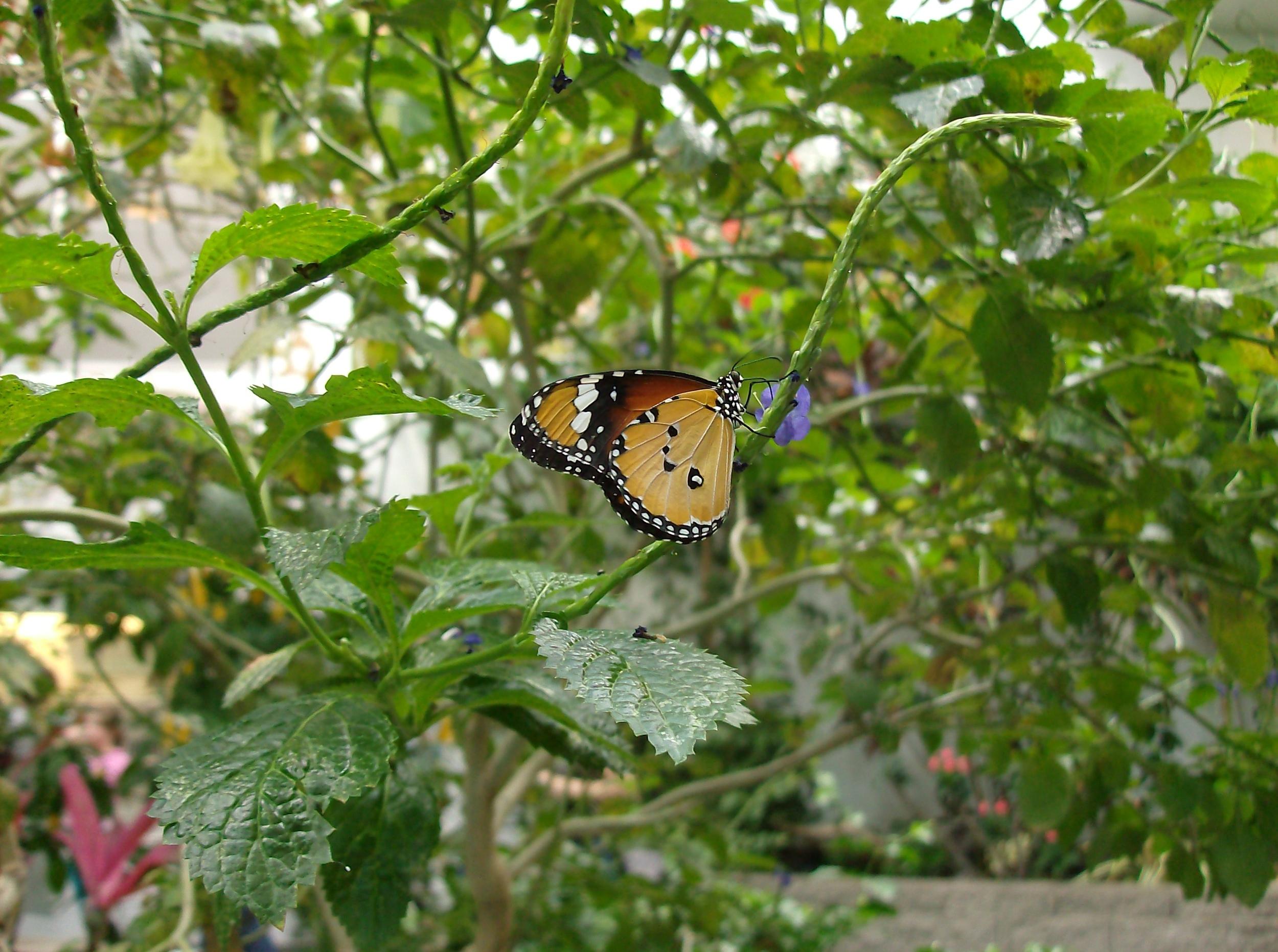 butterfly_hpim1348.jpg