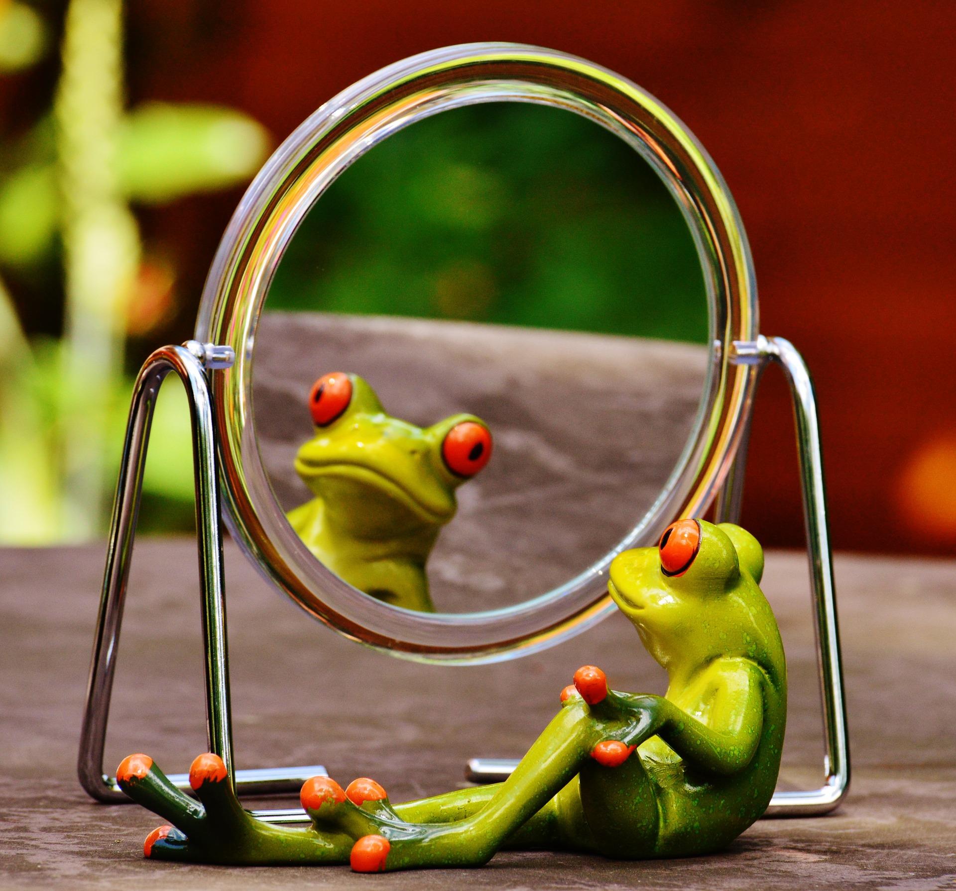 frog-1498909_1920.jpg