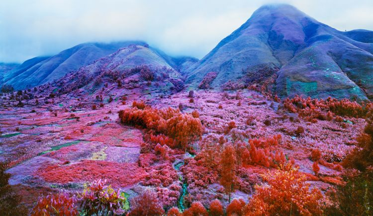 Richard Mosse Everything Merges with the Night 2015 digital c-print Represented by: Jack Shainman Gallery