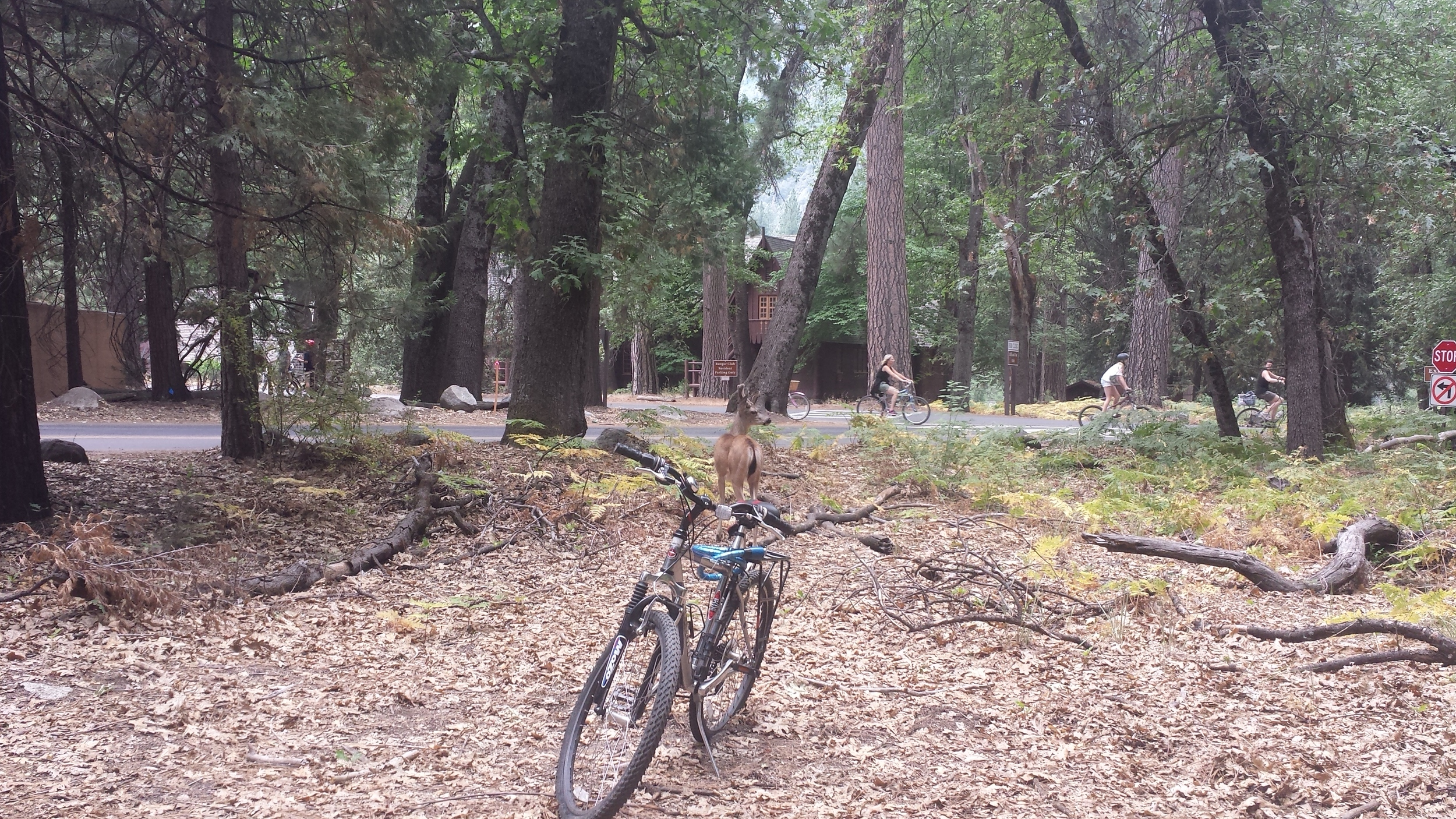 deer looking to steal a bike in front of Yosemite library