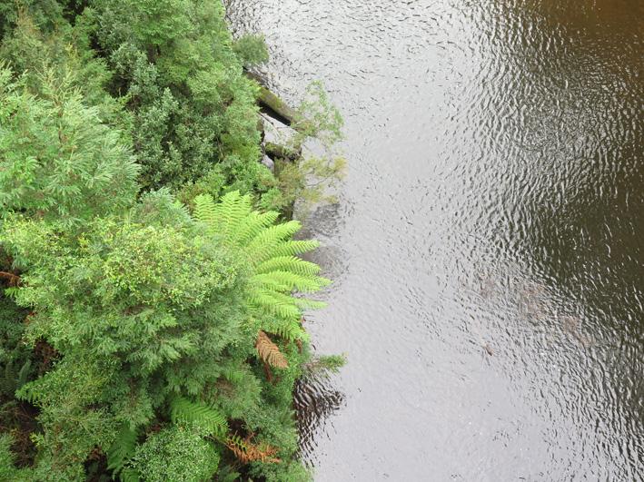 huskisson river, takayna/tarkine - north west tasmania