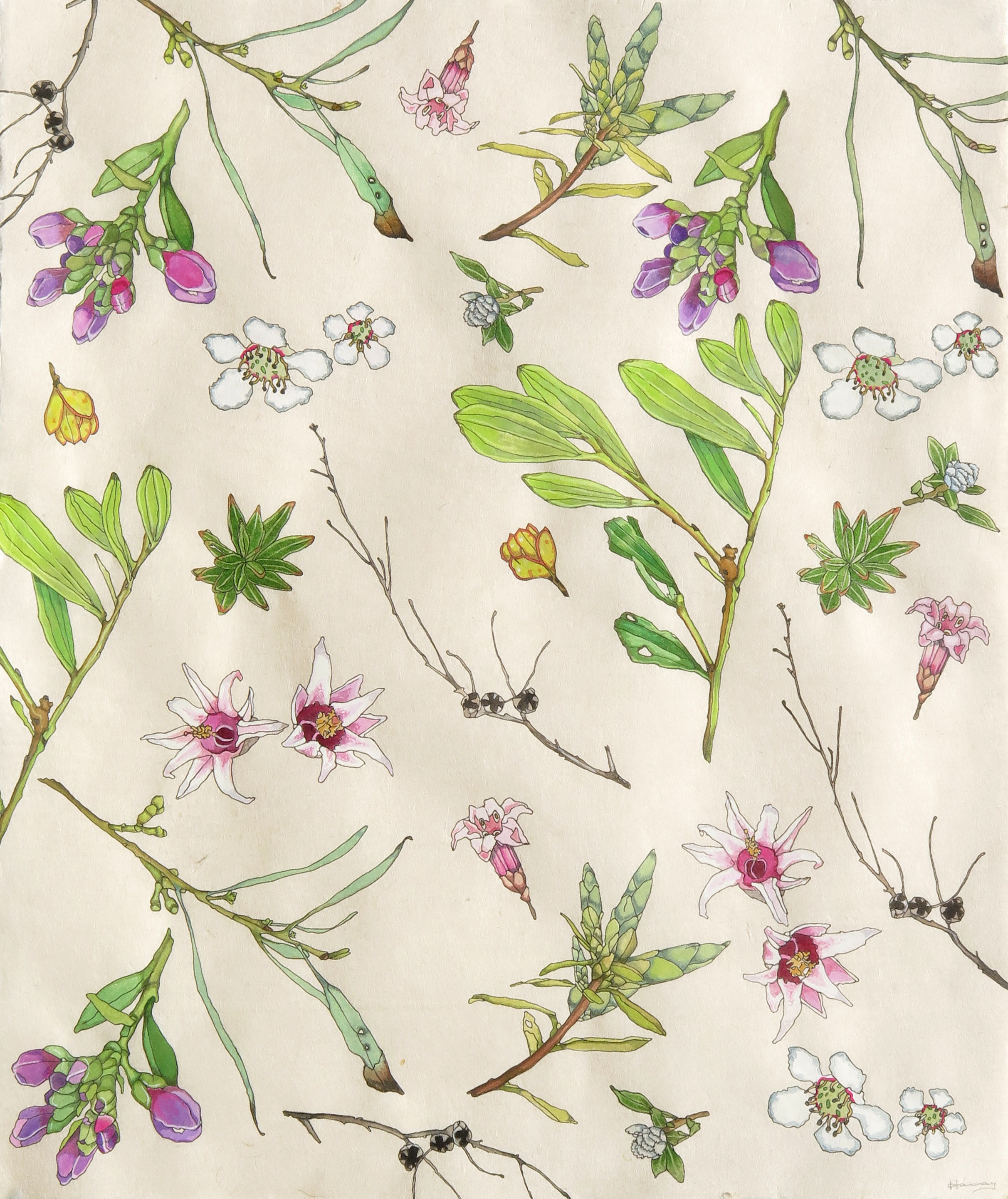 'tarkine flora 1' Gouache,watercolour and ink on kozo paper