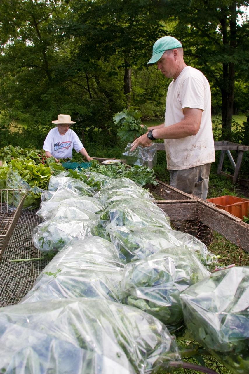 carter bagging greens.jpg