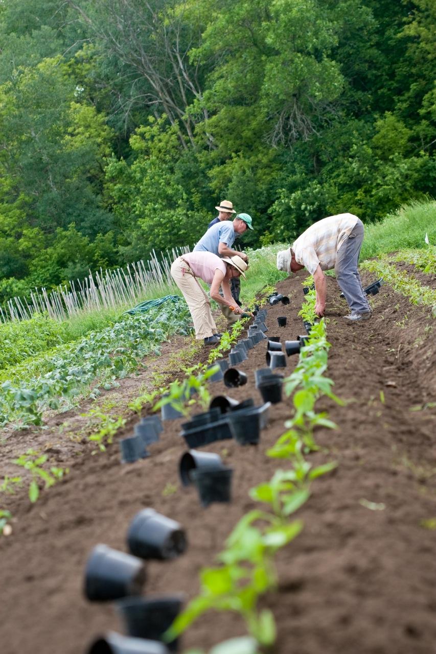 community planting.jpg