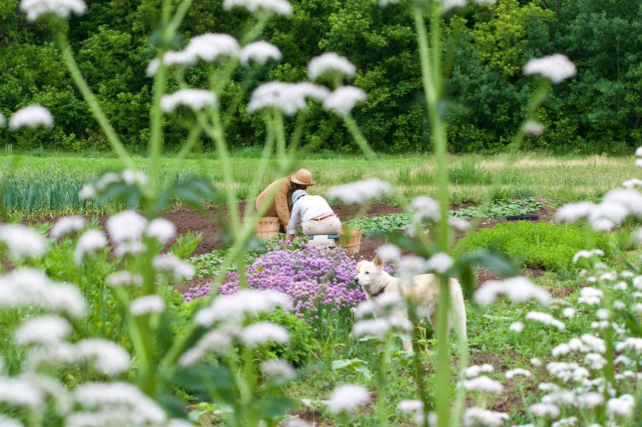 planting among the flowers.jpg