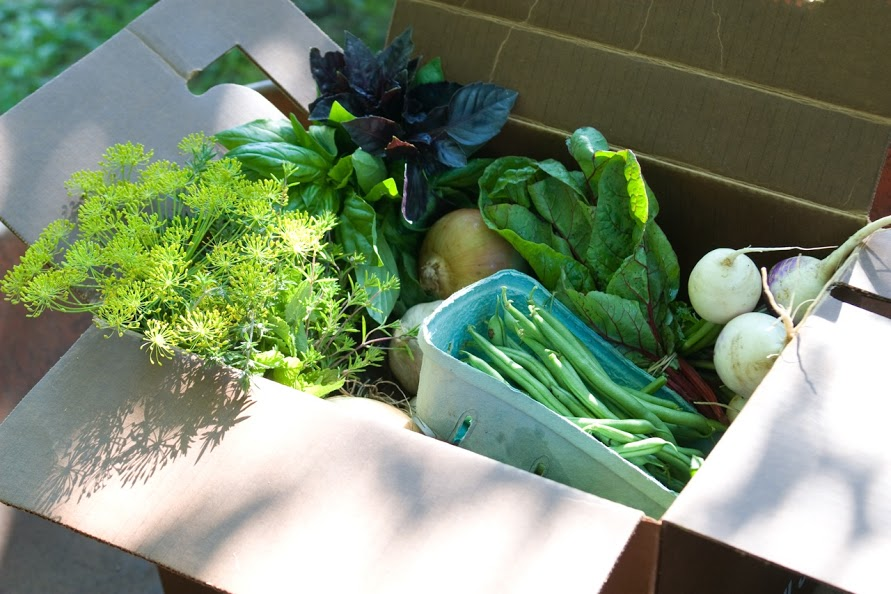 CSA Box of assorted, seasonal vegetables and herbs
