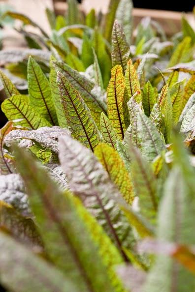 greens closeup.jpg