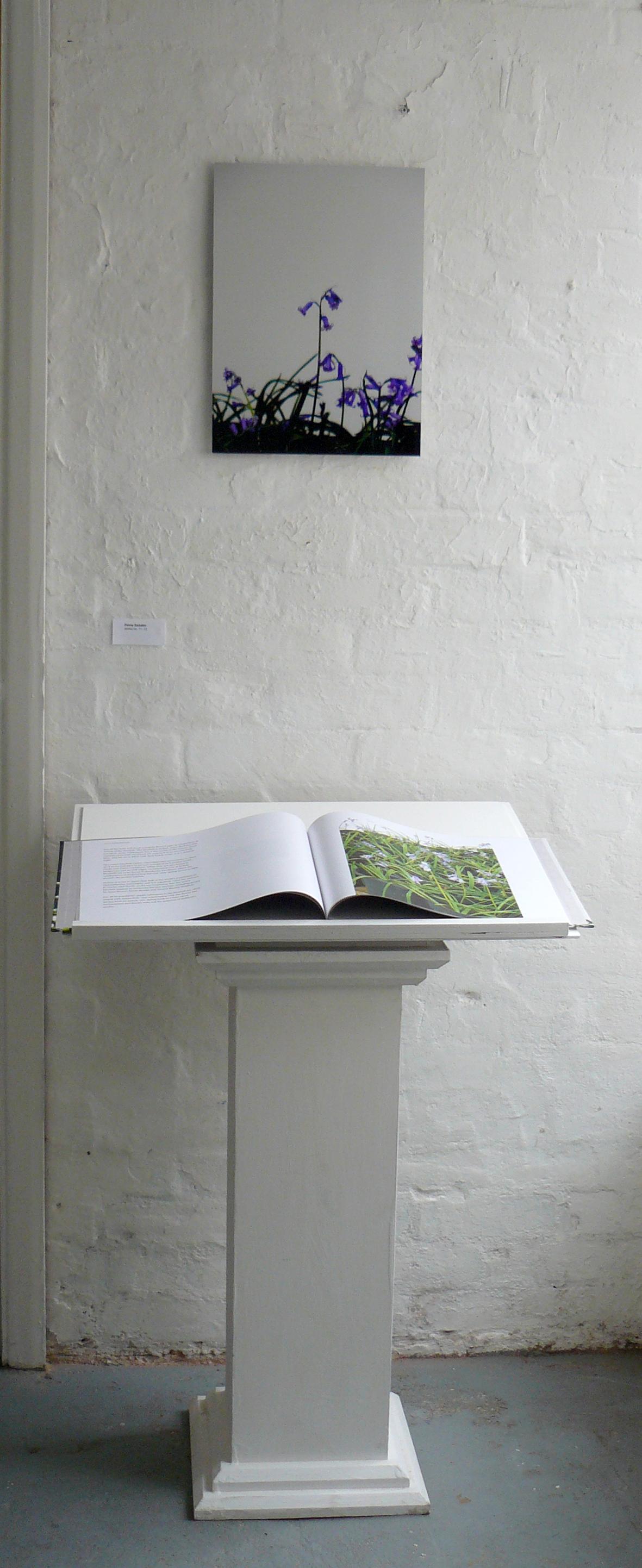 Bluebells 2011 installation view