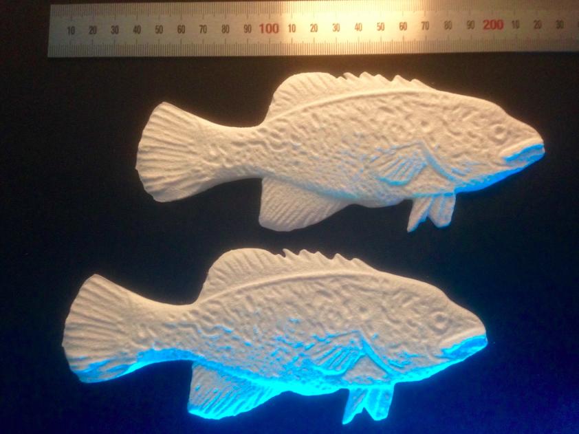 Cod 3D Printing 2.png