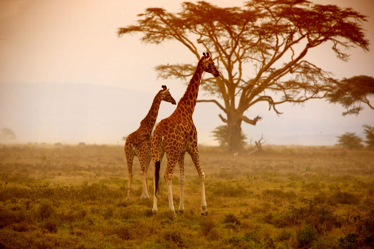 Luxury safari honeymoons in Africa through WedAways and Las Vegas Wedding Planner Andrea Eppolito.