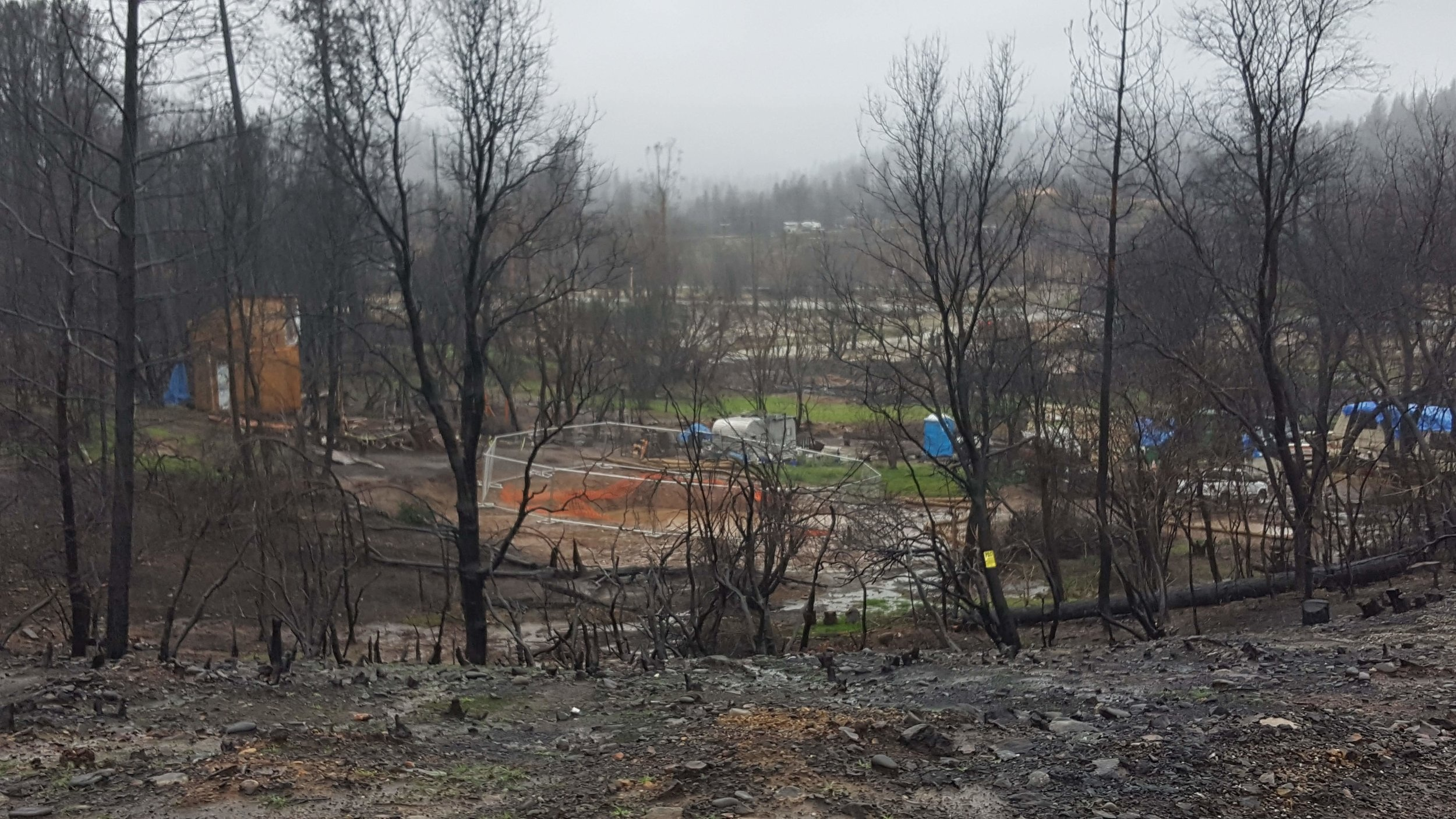 In the footprint of a home destroyed by the Carr Fire near Redding, CA, recent rains have brought new growth, green against the ashes and the blackened trees.  Photo Credit: Disciples Volunteering