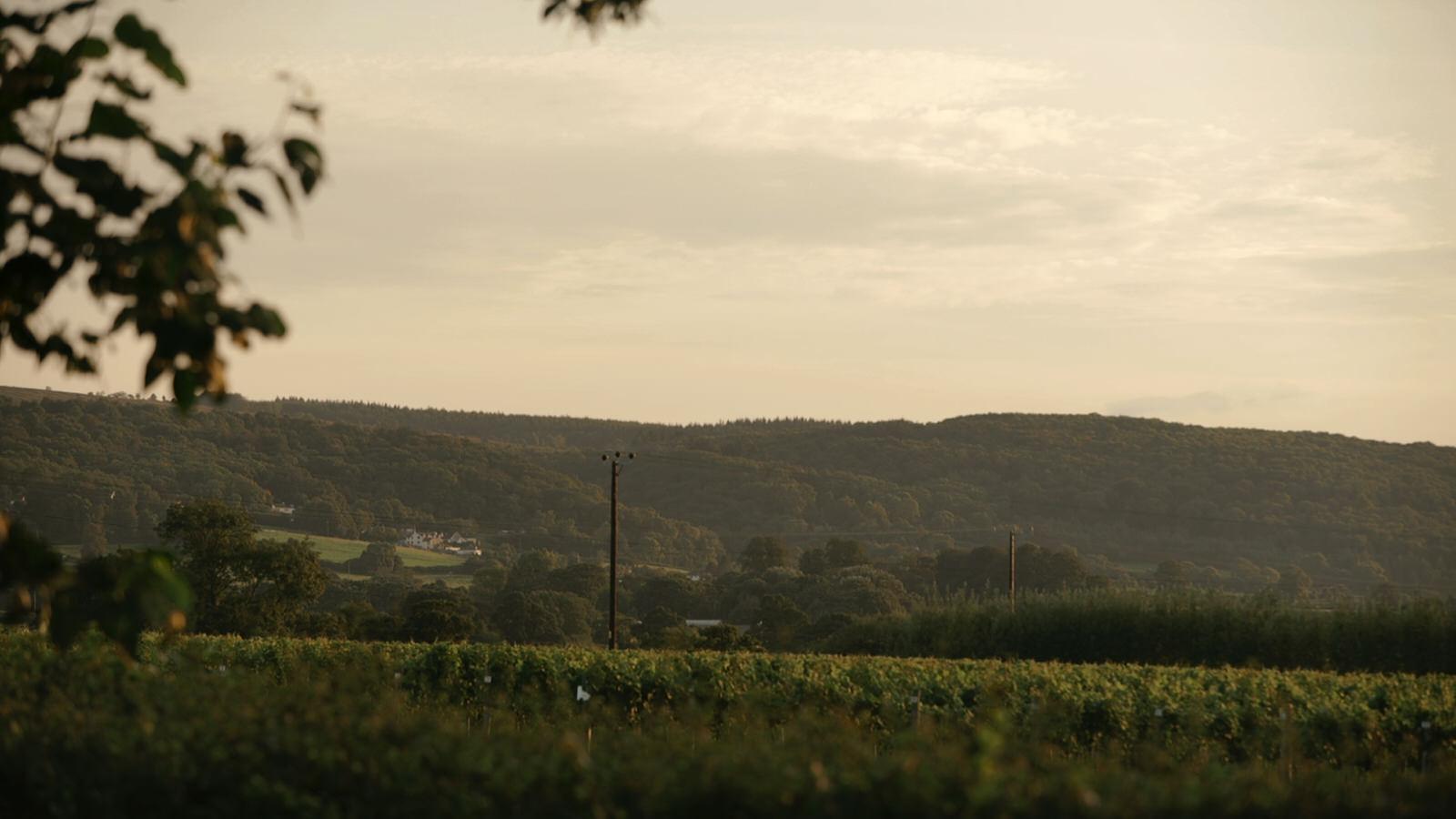 Aldwick Court Farm & Vineyard Wedding Videographer