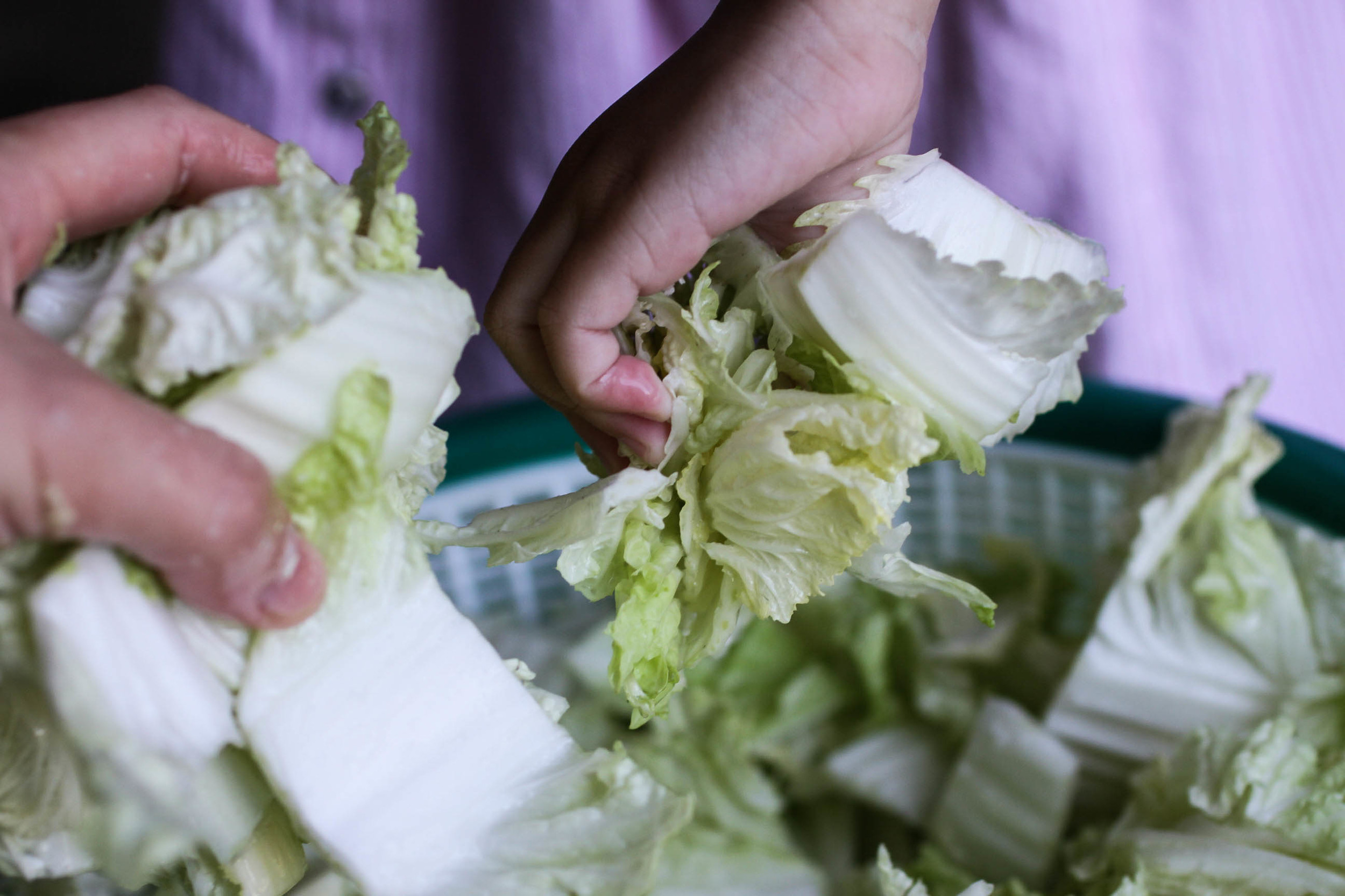 Allyson mixes the napa cabbage with salt.