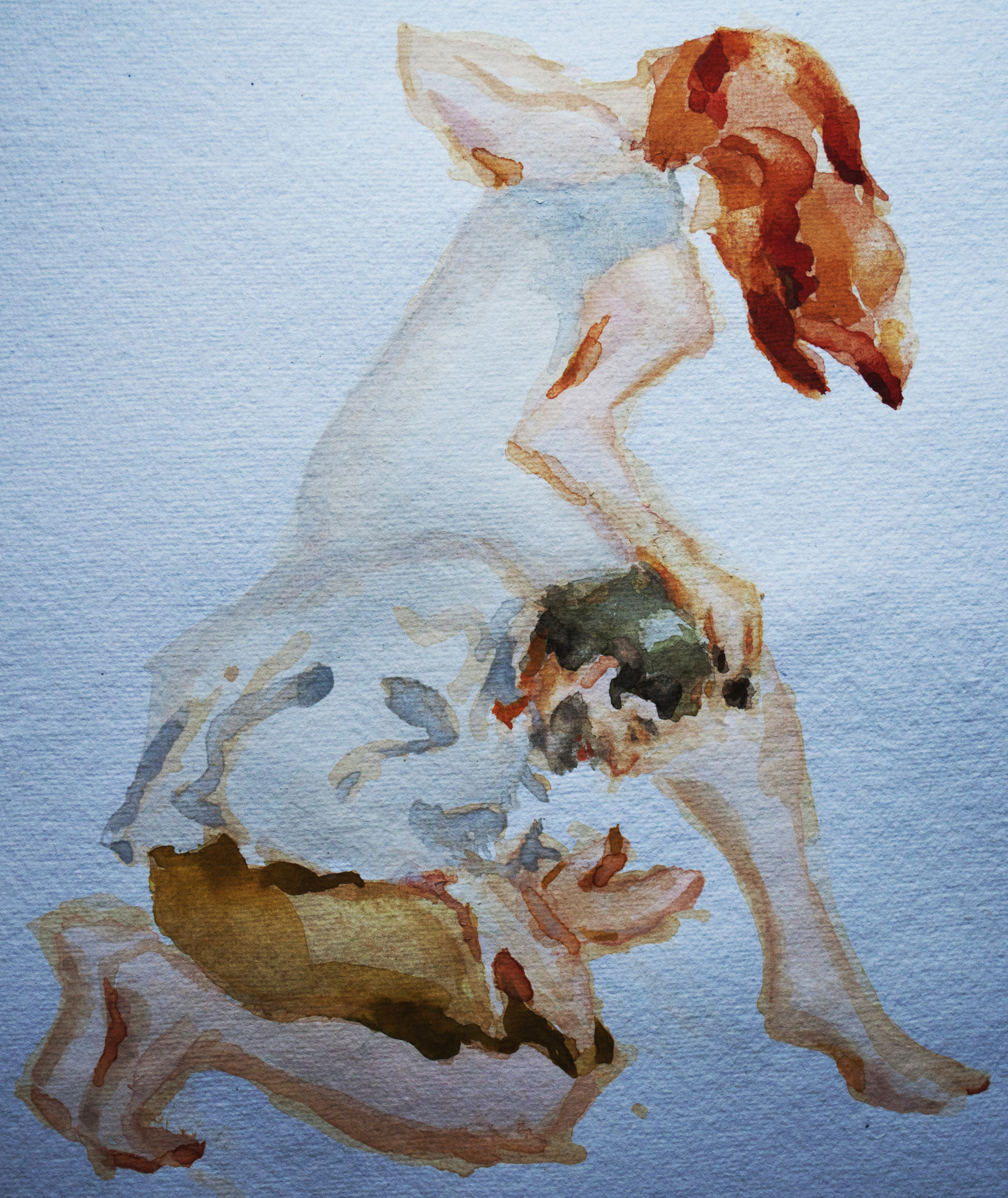 """One of my sketches from Janacek's opera used for the """"vixen""""stole"""