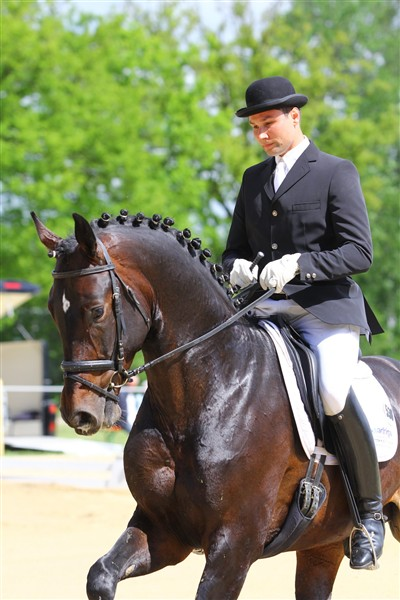 Dalimas morbror San Primero e. San Amour. Vann här sin kvaltävling till Bundeschampionatet i Warendorf för 5-åriga hästar 2013, detta var hans andra tävlingsstart i livet. Sin första start gjorde han i slutet av Maj 2013 i en MSV och där placerade han sig på en fin andraplats.