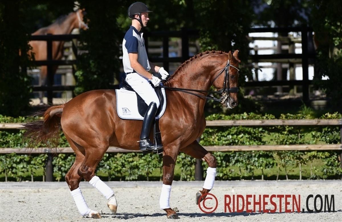 Foto:  Ridehesten  Artikel ridehesten:  http://www.ridehesten.com/nyheder/avlshingste-tester-nytarsformen/44062