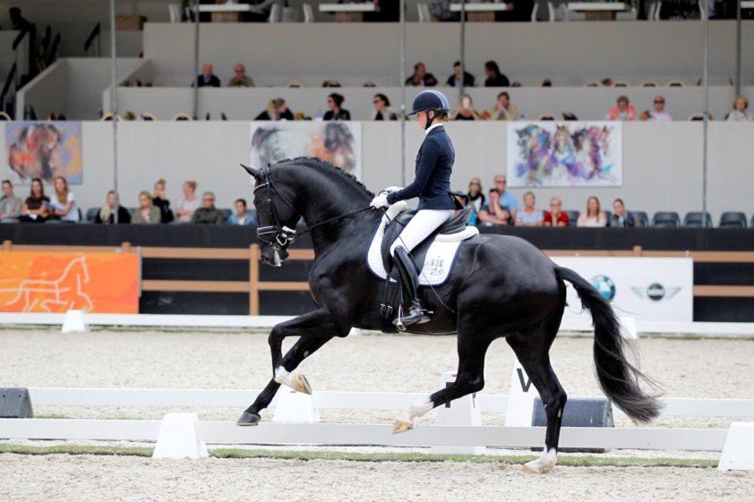 Jameson RS2  FOTO MELANIE BREVINK-VAN DIJK   www.horses.nl/dressuur/jameson-rs2-en-nog-twee-hengsten-naar-tweede-bezichtiging/