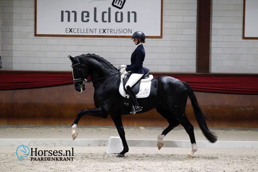 Jameson RS2  FOTO MELANIE BREVINK-VAN DIJK   www.horses.nl/fokkerij/hc-ermelo-jameson-rs2-klasse-apart-in-l-dressuur/