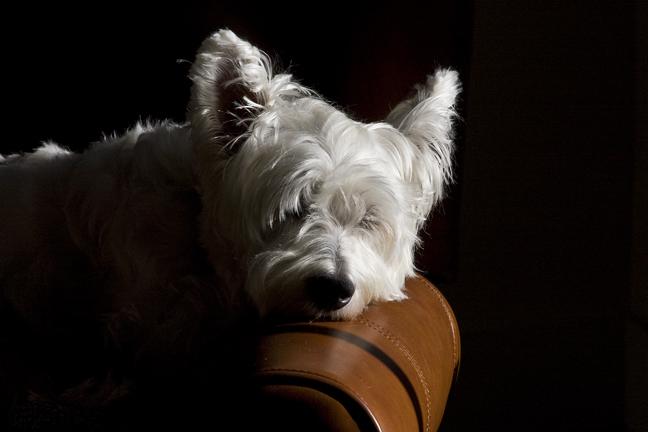 Henry_sleeping_armchair72.jpg