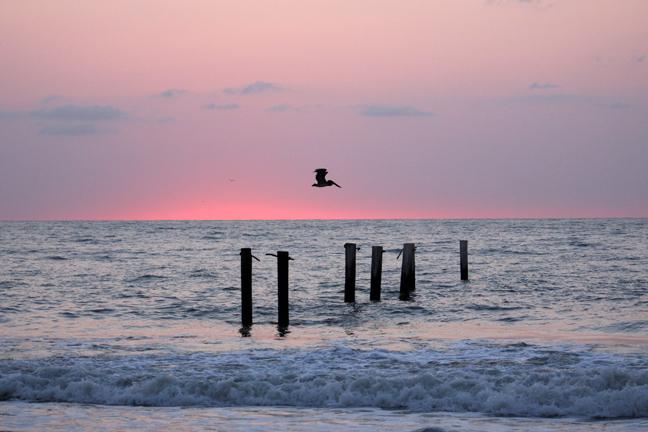 lone pelican-72.jpg