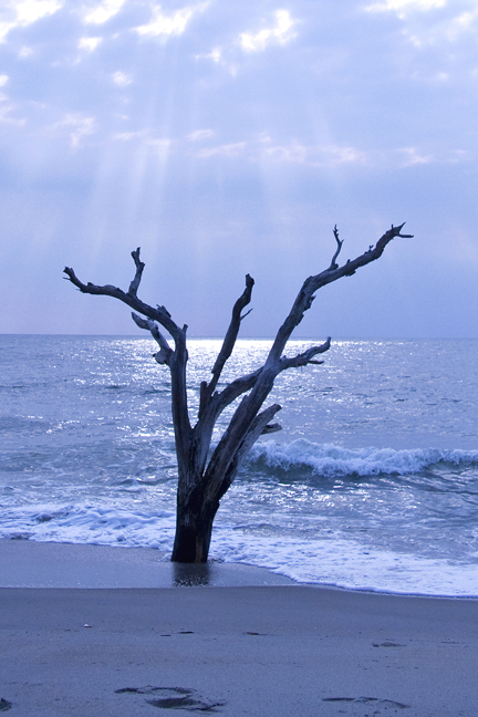 Lone Tree Blue 72.jpg