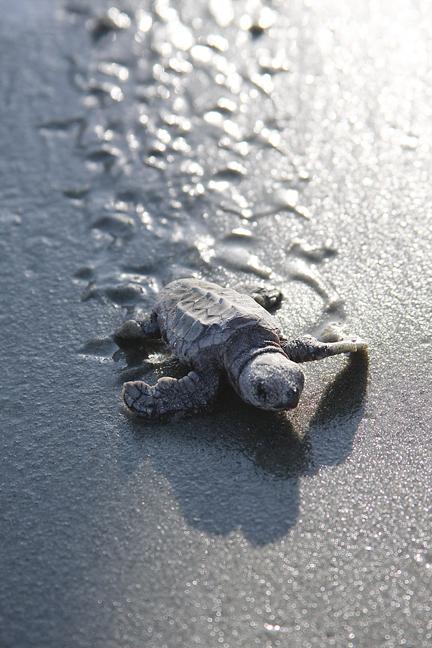 Turtle 72 - tracks.jpg