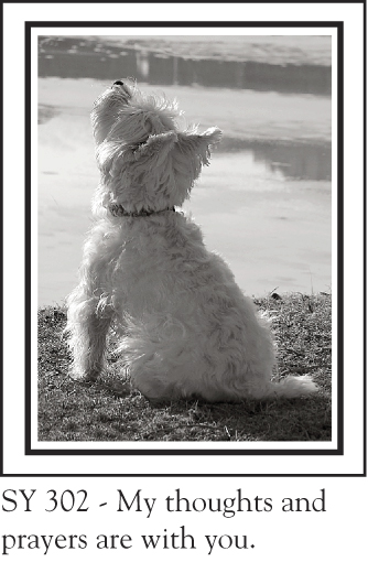 SY_302_westie_thoughts_70.jpg
