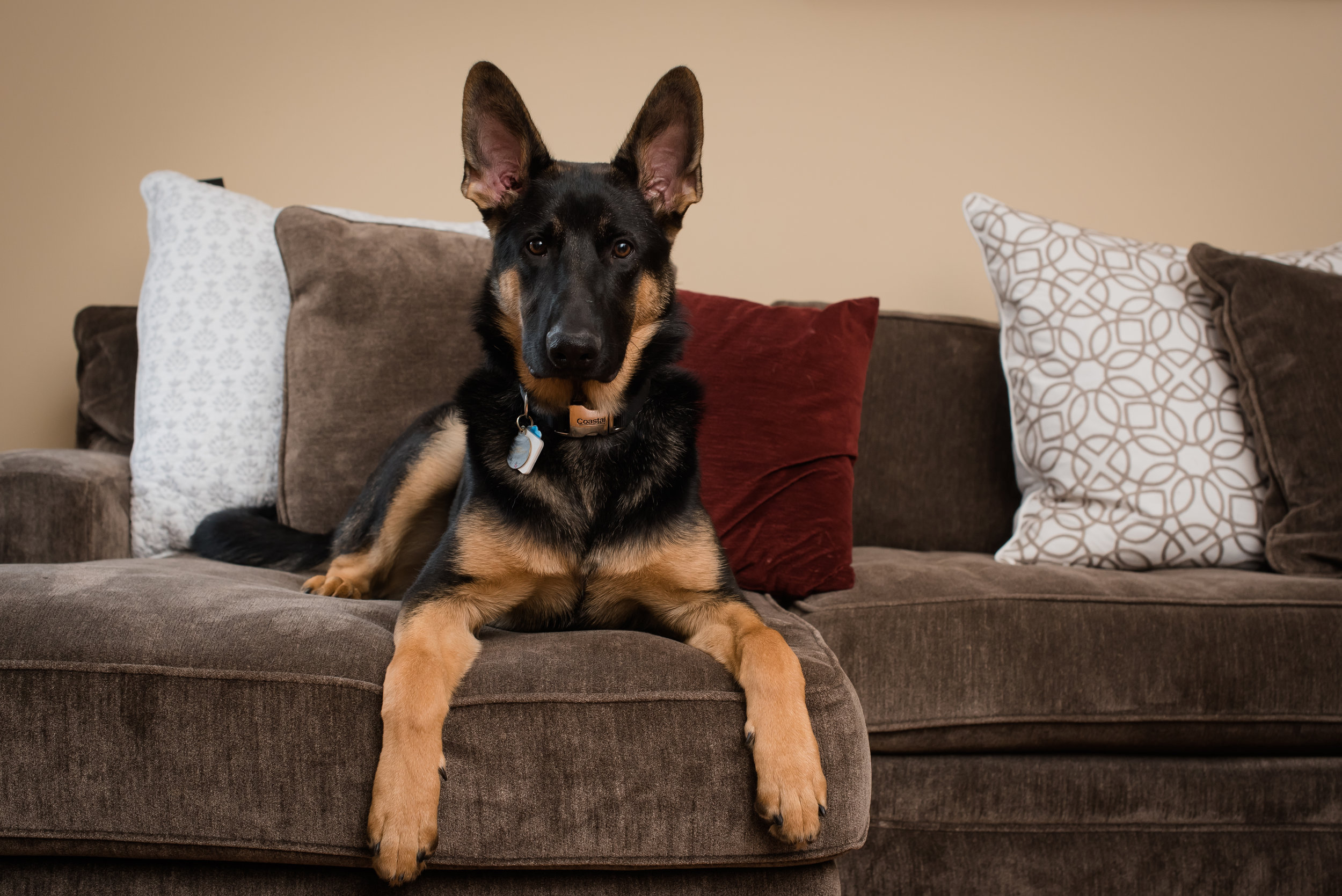 Pets - We all love our pets but sometimes buyers will be turned off if they see that the current owner has a dog or a catRemove all water bowls, liter boxes, animal beds, toys, etc.Make sure to have air fresheners in home to help combat any pet smells for showings