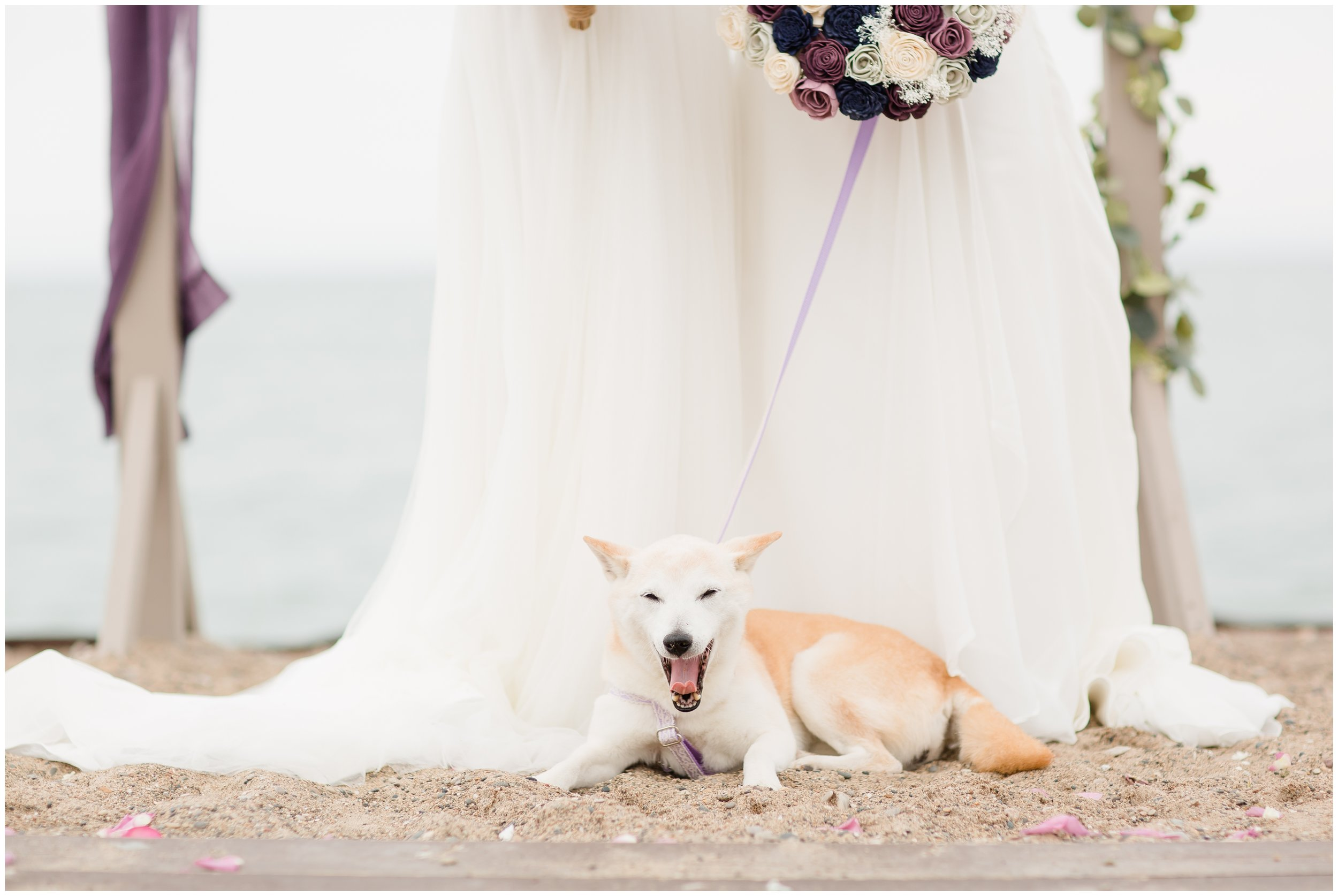 Wedding photo with Dog at Zion Illinois